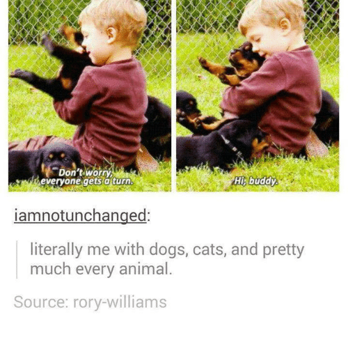 Rory: Don'tworry  everyone gets aturn  His buddy  iamnotunchanged:  literally me with dogs, cats, and pretty  much every animal  Source: rory-williams