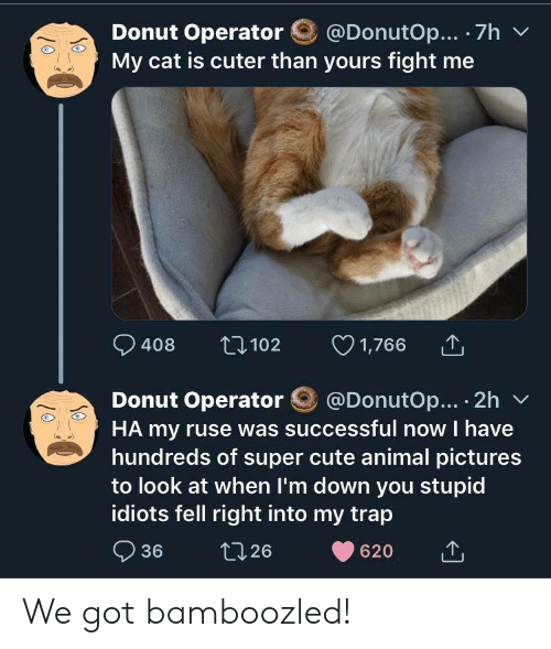 Cute, Trap, and Animal: @DonutOp... 7h  Donut Operator  My cat is cuter than yours fight me  1,766  t102  408  @DonutOp... 2h  Donut Operator  HA my ruse was successful now I have  hundreds of super cute animal pictures  to look at when I'm down you stupid  idiots fell right into my trap  36  t126  620 We got bamboozled!