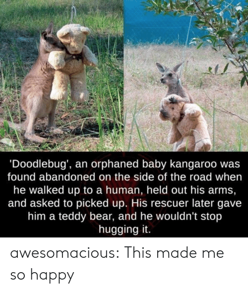 teddy bear: 'Doodlebug', an orphaned baby kangaroo wa:s  found abandoned on the side of the road when  he walked up to a human, held out his arms,  and asked to picked up. His rescuer later gave  him a teddy bear, and he wouldn't stop  hugging it. awesomacious:  This made me so happy