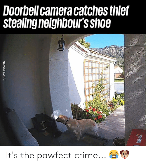 neighbours: Doorbell camera catches thief  Stealing neighbours Sh06 It's the pawfect crime... 😂🐶