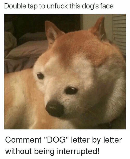 "Dog Faces: Double tap to unfuck this dog's face Comment ""DOG"" letter by letter without being interrupted!"