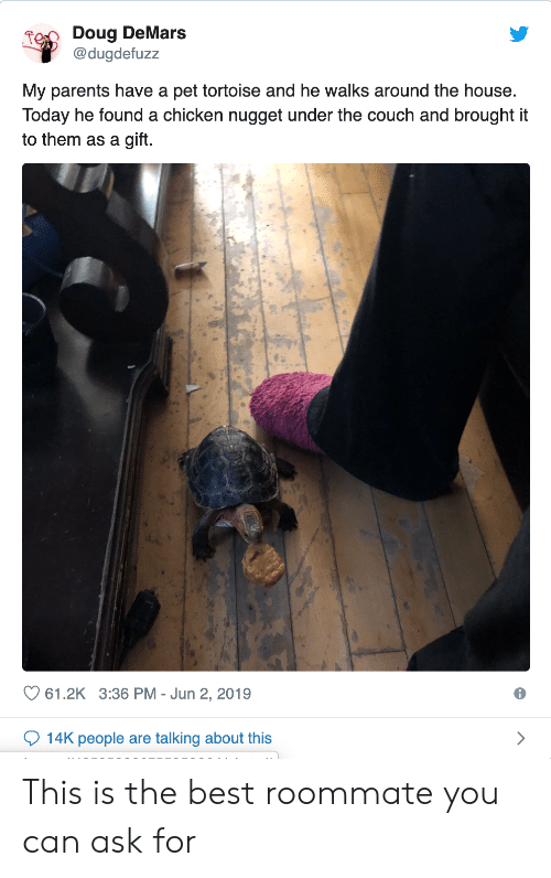 Doug, Parents, and Roommate: Doug DeMars  @dugdefuzz  My parents have a pet tortoise and he walks around the house.  Today he found a chicken nugget under the couch and brought it  to them as a gift.  61.2K 3:36 PM Jun 2, 2019  14K people are talking about this This is the best roommate you can ask for