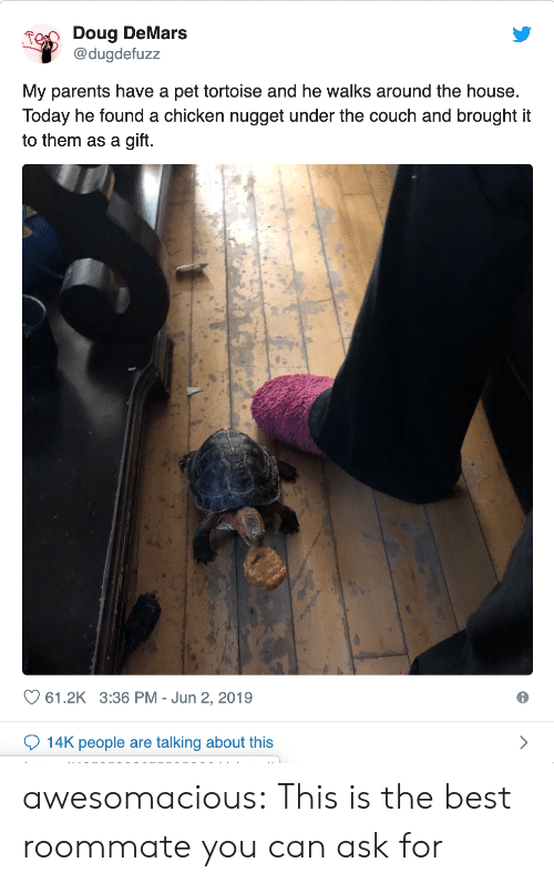 Doug, Parents, and Roommate: Doug DeMars  @dugdefuzz  My parents have a pet tortoise and he walks around the house.  Today he found a chicken nugget under the couch and brought it  to them as a gift.  61.2K 3:36 PM Jun 2, 2019  14K people are talking about this awesomacious:  This is the best roommate you can ask for