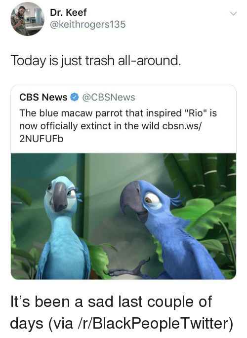 "Blackpeopletwitter, News, and Trash: Dr. Keef  @keithrogers135  Today is just trash all-around.  CBS News@CBSNews  The blue macaw parrot that inspired ""Rio"" is  now officially extinct in the wild cbsn.ws/  2NUFUFb It's been a sad last couple of days (via /r/BlackPeopleTwitter)"