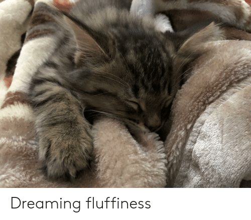 Fluffiness: Dreaming fluffiness