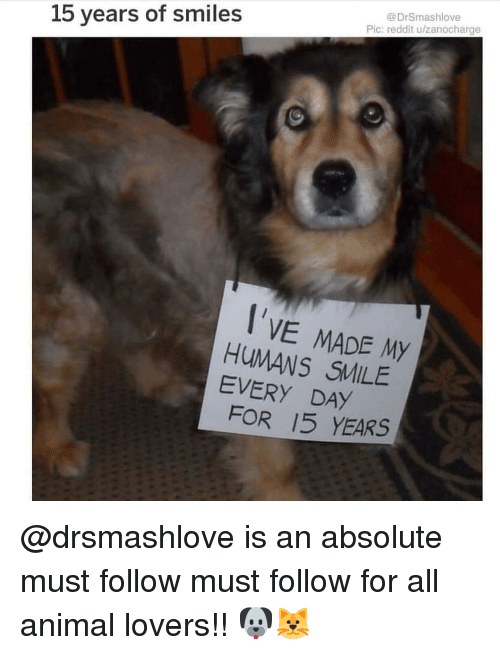 Memes, Reddit, and Animal: @DrSmashlove  Pic: reddit u/zanocharge  15 years of smiles  I'VE MADE My  HUMANS SMILE  EVERY DAİ  FOR 15 YEARS @drsmashlove is an absolute must follow must follow for all animal lovers!! 🐶🐱