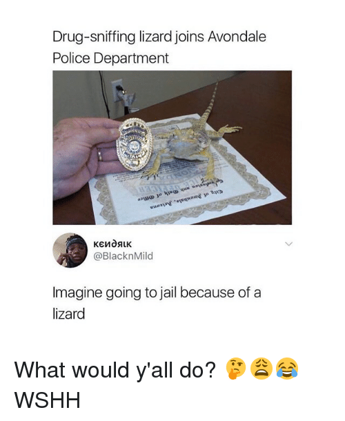 Jail, Memes, and Police: Drug-sniffing lizard joins Avondale  Police Department  @BlacknMild  Imagine going to jail because of a  lizard What would y'all do? 🤔😩😂 WSHH