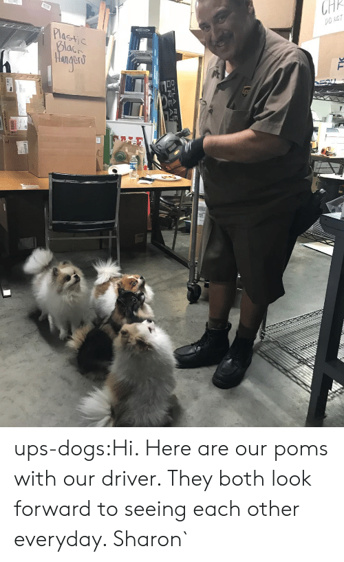 Dogs, Target, and Tumblr: DTLA RE  CREAT ups-dogs:Hi. Here are our poms with our driver. They both look forward to seeing each other everyday. Sharon`