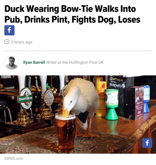 Pub: Duck Wearing Bow-Tie Walks Into  Pub, Drinks Pint, Fights Dog, Loses  3 hours ago  Ryan Barrell Writer at the Huffington Post UK  Doteea  BARNE  DARTMOOR  SWNS.com