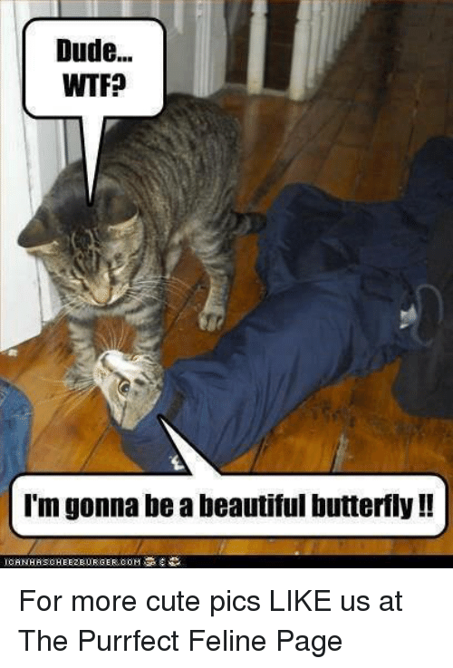 beautiful butterfly: Dude...  WTF?  I'm gonna be a beautiful butterfly  ICANTHRSCHEEZEURGER For more cute pics LIKE us at The Purrfect Feline Page
