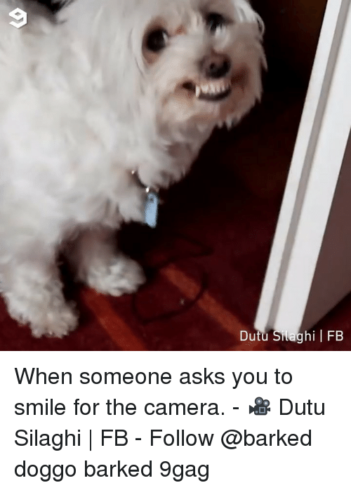 smile for the camera: Dutu Silaghi FB When someone asks you to smile for the camera. - 🎥 Dutu Silaghi | FB - Follow @barked doggo barked 9gag