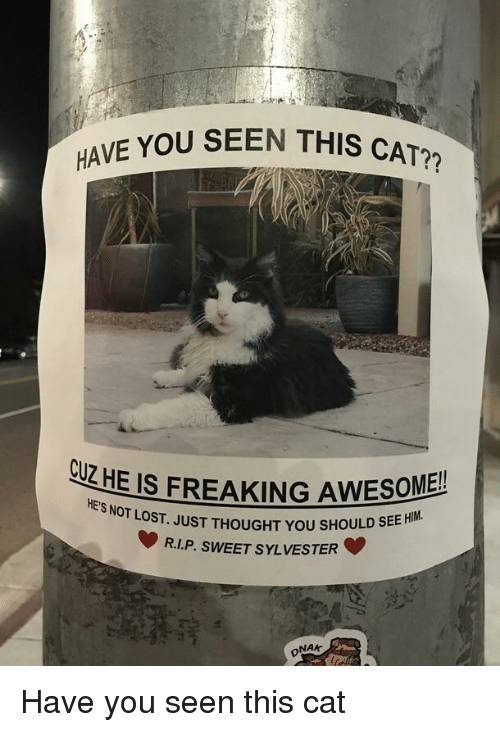 Have You Seen This Cat: E YOU SEEN THIS CAT?  CUZHE IS FREAKING AWESOME!  SNOT LOST. JUST THOUGHT YOU SHOULD SEE  R.LP. SWEET SYLVESTER  HE'S NOT LO  NAK