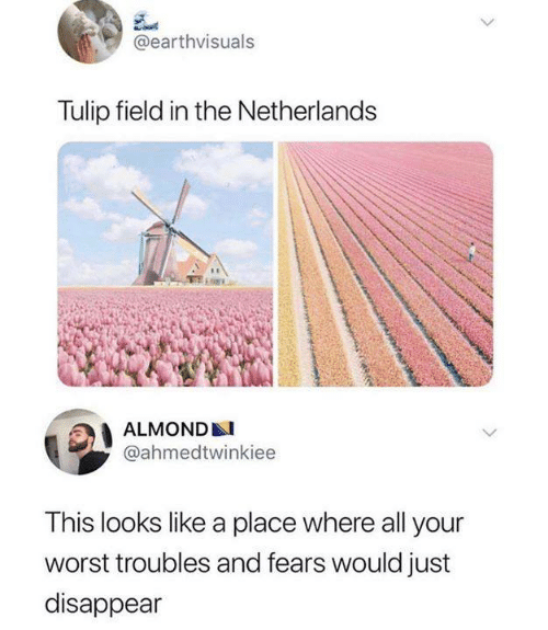 Funny, Tumblr, and Netherlands: @earthvisuals  Tulip field in the Netherlands  ALMOND  @ahmedtwinkiee  This looks like a place where all your  worst troubles and fears would just  disappear
