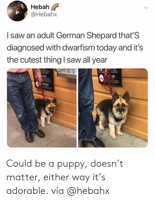 Saw, Smoking, and Puppy: eba  @Hebahx  I saw an adult German Shepard that'S  diagnosed with dwarfism today and it's  the cutest thing I saw all year  ING  SMOKING Could be a puppy, doesn't matter, either way it's adorable.via @hebahx