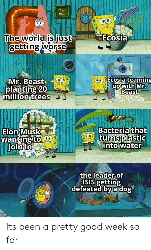 ISIS: Ecosia  The world is just  getting worse  Ecosia teaming  Mr. Beast  planting 20  million trees  up with Mr.  Beast  Bacteria that  turns plastic  into water  Elon Musk  wanting to  join in  the leader of  ISIS getting  defeated by a dog Its been a pretty good week so far
