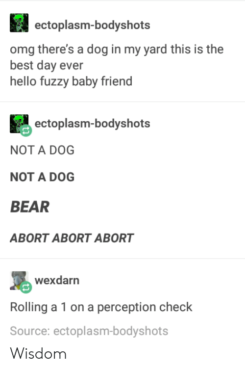Hello, Omg, and Bear: ectoplasm-bodyshots  omg there's a dog in my yard this is the  best day ever  hello fuzzy baby friend  ectoplasm-bodyshots  NOT A DOG  NOT A DOG  BEAR  ABORT ABORT ABORT  wexdarn  Rolling a 1 on a perception check  Source: ectoplasm-bodyshots Wisdom