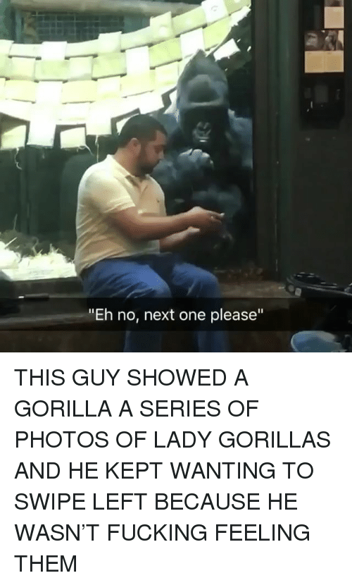 "Fucking, Memes, and 🤖: ""Eh no, next one please"" THIS GUY SHOWED A GORILLA A SERIES OF PHOTOS OF LADY GORILLAS AND HE KEPT WANTING TO SWIPE LEFT BECAUSE HE WASN'T FUCKING FEELING THEM"