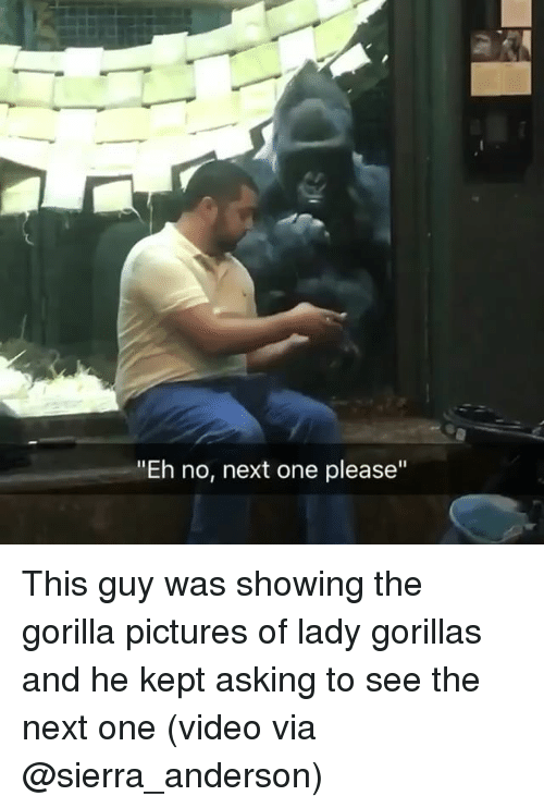 """Memes, Pictures, and Video: """"Eh no, next one please"""" This guy was showing the gorilla pictures of lady gorillas and he kept asking to see the next one (video via @sierra_anderson)"""