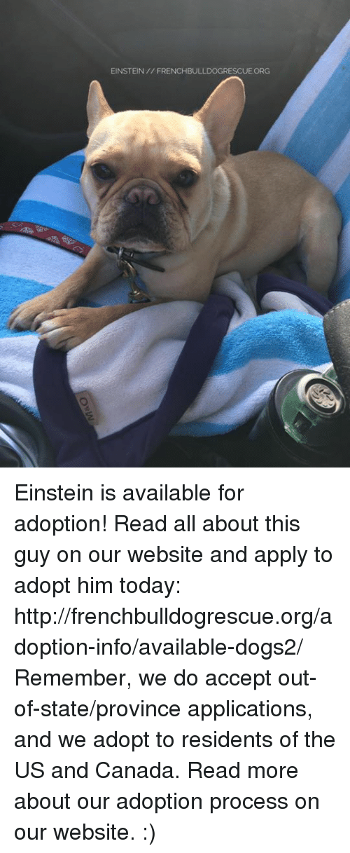 Applie: EINSTEIN FRENCHBULLDOGRESCUE ORG Einstein is available for adoption! Read all about this guy on our website <location, likes, dislikes> and apply to adopt him today: http://frenchbulldogrescue.org/adoption-info/available-dogs2/  Remember, we do accept out-of-state/province applications, and we adopt to residents of the US and Canada. Read more about our adoption process on our website. :)