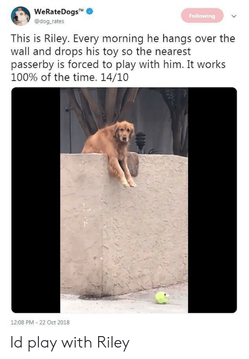 Passerby: eKateDogS  Following  @dog rates  This is Riley. Every morning he hangs over the  wall and drops his toy so the nearest  passerby is forced to play with him. It works  100% of the time. 14/10  12:08 PM-22 Oct 2018 Id play with Riley