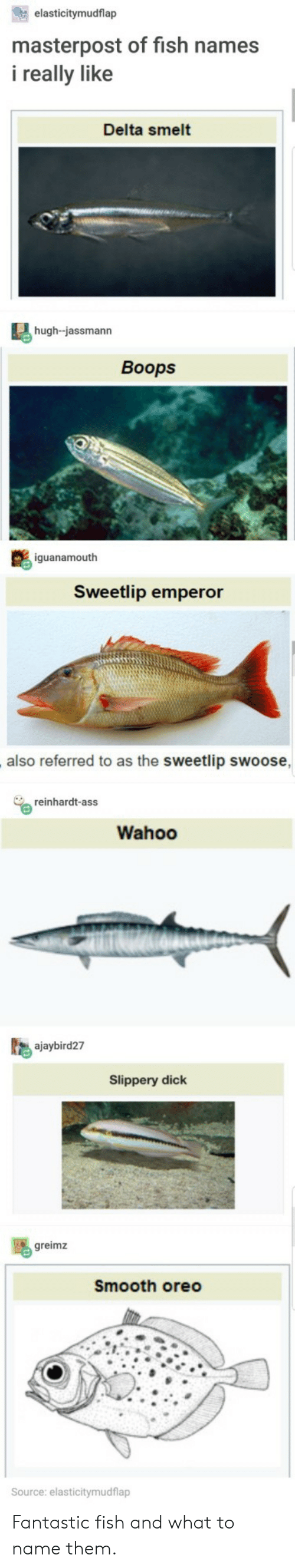 smelt: elasticitymudflap  masterpost of fish names  i really like  Delta smelt  hugh-jassmann  Boops  iguanamouth  Sweetlip emperor  also referred to as the sweetlip swoose  reinhardt-ass  Wahoo  ajaybird27  Slippery dick  greimz  Smooth oreo  ource: elasticitymudflap Fantastic fish and what to name them.