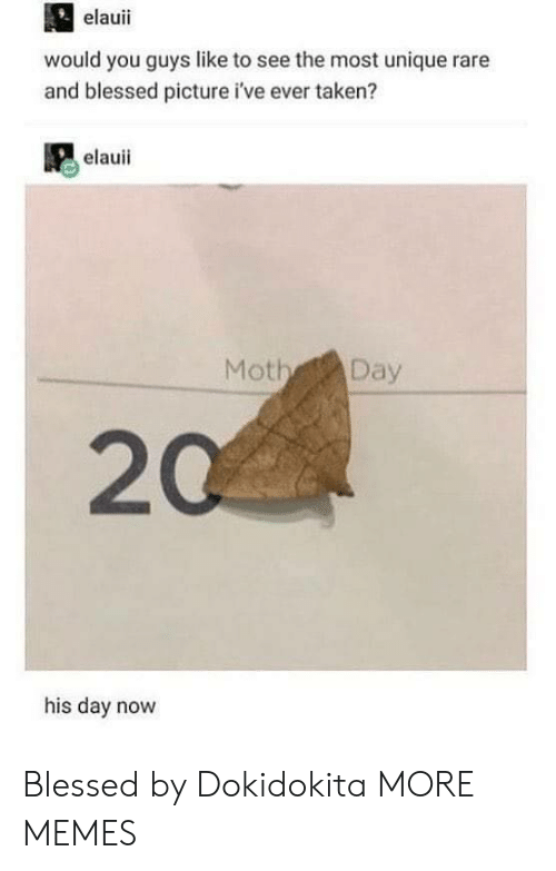Blessed, Dank, and Memes: elauii  would you guys like to see the most unique rare  and blessed picture i've ever taken?  elauii  Moth Day  20  his day novw Blessed by Dokidokita MORE MEMES