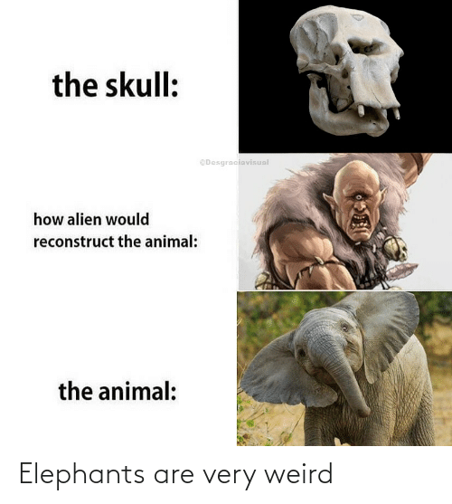 Weird, Elephants, and Very: Elephants are very weird