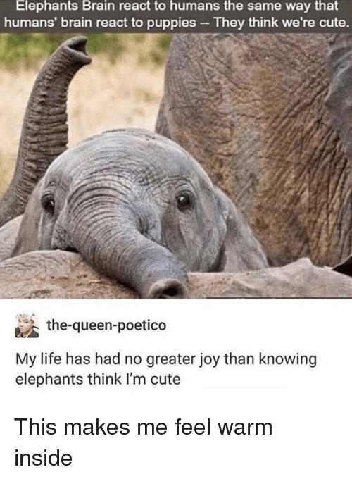 Cute, Life, and Puppies: Elephants  Brain  react to  humans  the  same way  that  humans' brain react to puppies- They think we're cute  the-queen-poetico  My life has had no greater joy than knowing  elephants think I'm cute This makes me feel warm inside