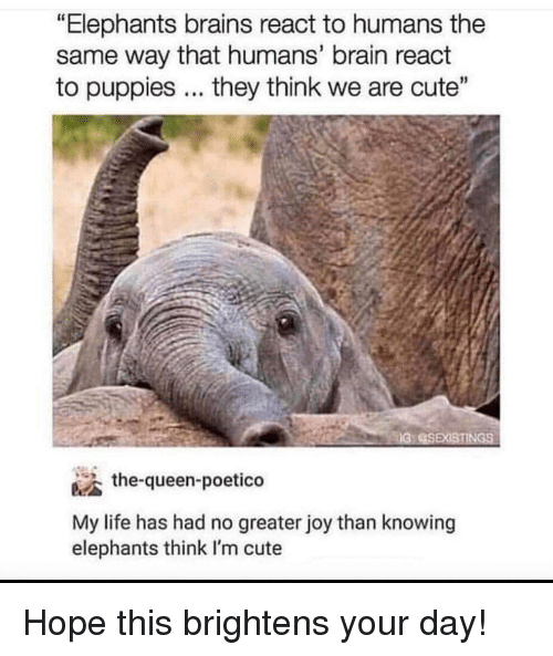 """Elephants: """"Elephants brains react to humans the  same way that humans' brain react  to puppies... they think we are cute""""  the-queen-poetico  My life has had no greater joy than knowing  elephants think I'm cute Hope this brightens your day!"""
