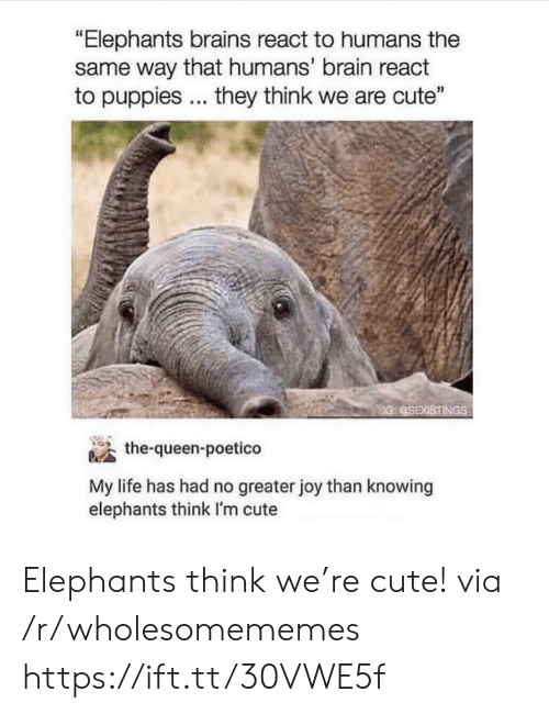 "Puppies: ""Elephants brains react to humans the  same way that humans' brain react  to puppies... they think we are cute""  IG SEXISTINGS  the-queen-poetico  My life has had no greater joy than knowing  elephants think I'm cute Elephants think we're cute! via /r/wholesomememes https://ift.tt/30VWE5f"