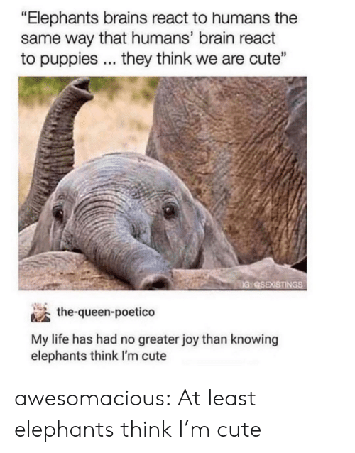 "Puppies: ""Elephants brains react to humans the  same way that humans' brain react  to puppies... they think we are cute""  IG:SEXISTINGS  the-queen-poetico  My life has had no greater joy than knowing  elephants think I'm cute awesomacious:  At least elephants think I'm cute"