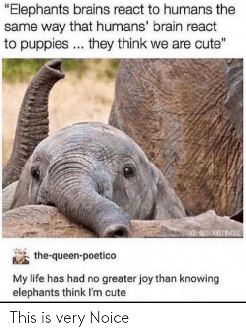"Puppies: ""Elephants brains react to humans the  same way that humans' brain react  to puppies .. they think we are cute""  IG QSEXISTINGS  the-queen-poetico  My life has had no greater joy than knowing  elephants think I'm cute This is very Noice"