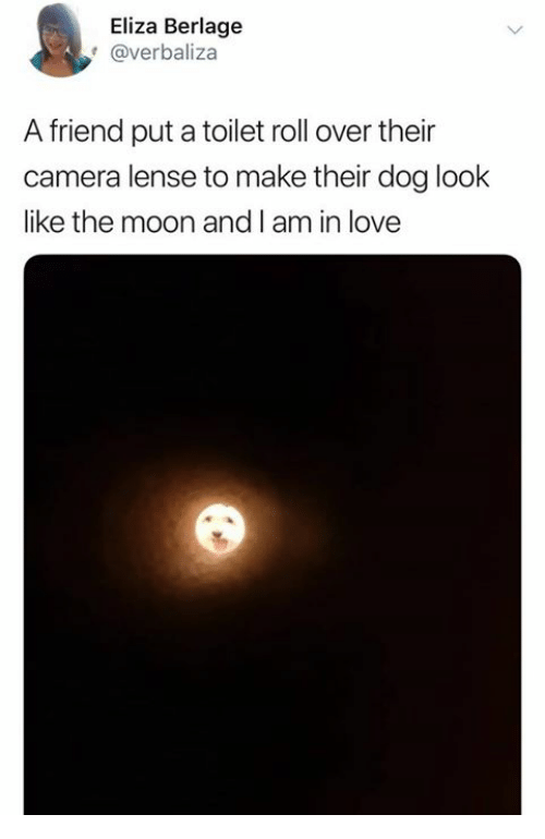 roll over: Eliza Berlage  @verbaliza  A friend put a toilet roll over their  camera lense to make their dog look  like the moon and I am in love