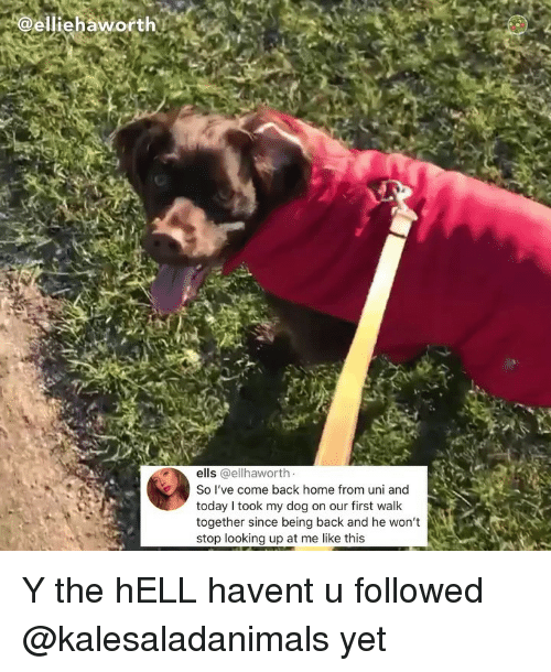 Memes, Home, and Today: elliehaworth  ells @ellhaworth  So I've come back home from uni and  today I took my dog on our first walk  together since being back and he won't  stop looking up at me like this Y the hELL havent u followed @kalesaladanimals yet