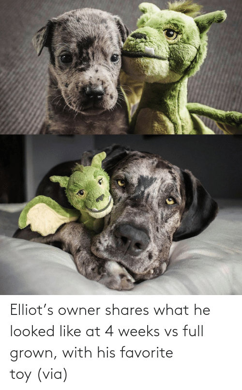 aww: Elliot's owner shares what he looked like at 4 weeks vs full grown, with his favorite toy (via)