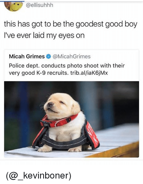 k-9: @ellisuhhh  this has got to be the goodest good boy  I've ever laid my eyes on  Micah Grimes@MicahGrimes  Police dept. conducts photo shoot with their  very good K-9 recruits. trib.al/iaK6jMx (@_kevinboner)