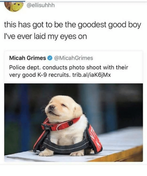 k-9: @ellisuhhh  this has got to be the goodest good boy  I've ever laid my eyes on  Micah Grimes@MicahGrimes  Police dept. conducts photo shoot with their  very good K-9 recruits. trib.al/iaK6jMx