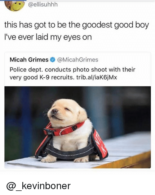 Funny, Meme, and Police: @ellisuhhh  this has got to be the goodest good boy  I've ever laid my eyes on  Micah Grimes @MicahGrimes  Police dept. conducts photo shoot with their  very good K-9 recruits. trib.al/iaK6jM:x @_kevinboner
