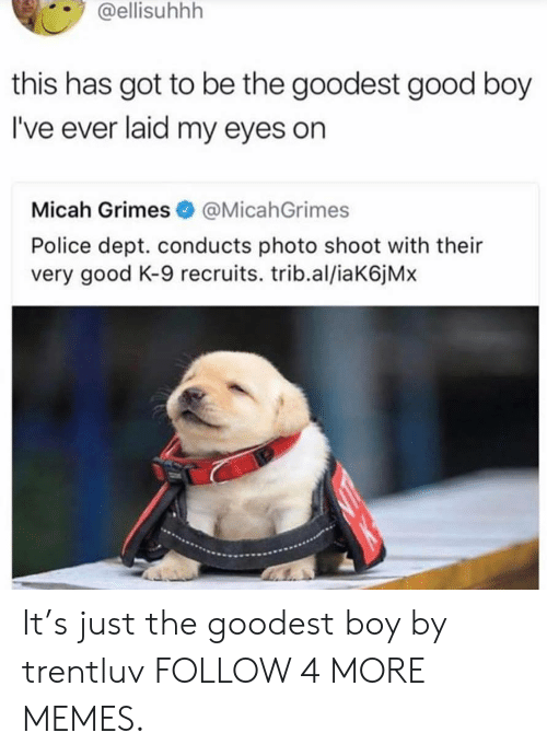k-9: @ellisuhhh  this has got to be the goodest good boy  I've ever laid my eyes on  Micah Grimes @MicahGrimes  Police dept. conducts photo shoot with their  very good K-9 recruits. trib.al/iaK6j Mx It's just the goodest boy by trentluv FOLLOW 4 MORE MEMES.