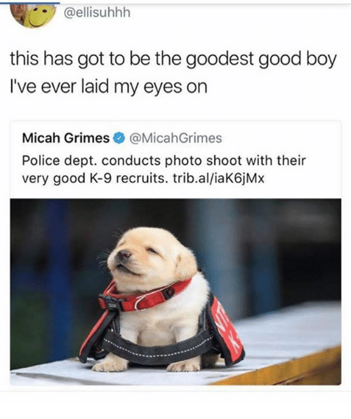 k-9: @ellisuhhlh  this has got to be the goodest good boy  I've ever laid my eyes on  Micah Grimes@MicahGrimes  Police dept. conducts photo shoot with their  very good K-9 recruits. trib.al/iaK6jMx