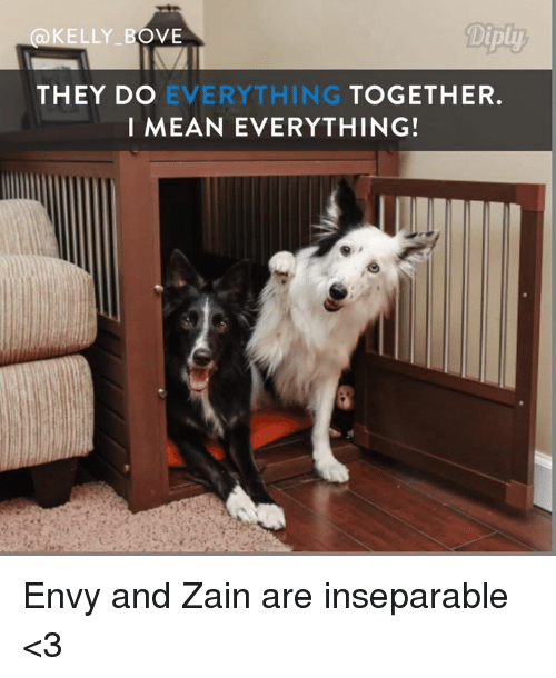 zain: ELLY BOVE  THEY DO  EVERYTHING  TO  I MEAN EVERYTHING! Envy and Zain are inseparable <3