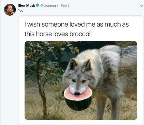 broccoli: Elon Musk@elonmusk Feb 2  res  I wish someone loved me as much as  this horse loves broccoli