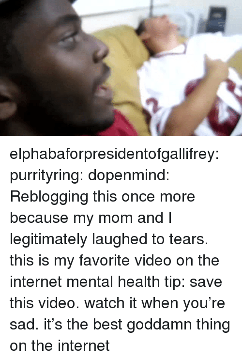 Internet, Tumblr, and Best: elphabaforpresidentofgallifrey: purrityring:  dopenmind: Reblogging this once more because my mom and I legitimately laughed to tears. this is my favorite video on the internet  mental health tip: save this video. watch it when you're sad. it's the best goddamn thing on the internet
