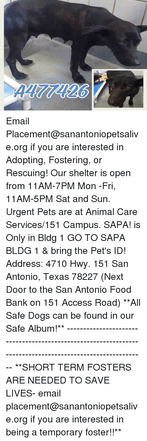 food bank: Email Placement@sanantoniopetsalive.org if you are interested in Adopting, Fostering, or Rescuing!  Our shelter is open from 11AM-7PM Mon -Fri, 11AM-5PM Sat and Sun.  Urgent Pets are at Animal Care Services/151 Campus. SAPA! is Only in Bldg 1 GO TO SAPA BLDG 1 & bring the Pet's ID! Address: 4710 Hwy. 151 San Antonio, Texas 78227 (Next Door to the San Antonio Food Bank on 151 Access Road)  **All Safe Dogs can be found in our Safe Album!** ---------------------------------------------------------------------------------------------------------- **SHORT TERM FOSTERS ARE NEEDED TO SAVE LIVES- email placement@sanantoniopetsalive.org if you are interested in being a temporary foster!!**