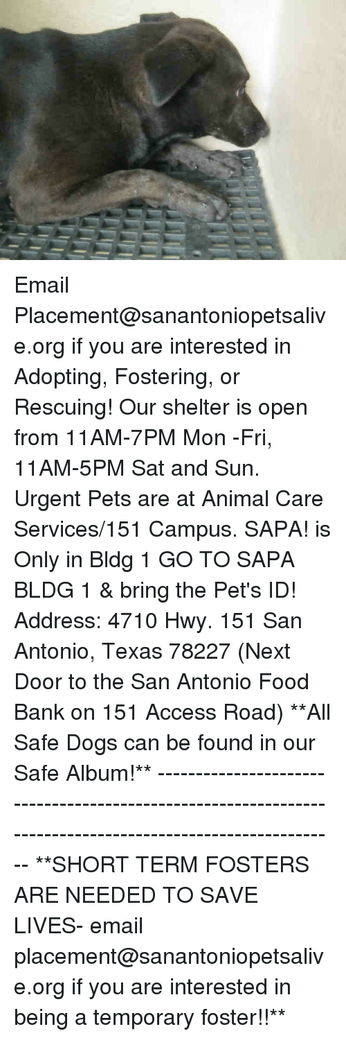 fosters: Email Placement@sanantoniopetsalive.org if you are interested in Adopting, Fostering, or Rescuing!  Our shelter is open from 11AM-7PM Mon -Fri, 11AM-5PM Sat and Sun.  Urgent Pets are at Animal Care Services/151 Campus. SAPA! is Only in Bldg 1 GO TO SAPA BLDG 1 & bring the Pet's ID! Address: 4710 Hwy. 151 San Antonio, Texas 78227 (Next Door to the San Antonio Food Bank on 151 Access Road)  **All Safe Dogs can be found in our Safe Album!** ---------------------------------------------------------------------------------------------------------- **SHORT TERM FOSTERS ARE NEEDED TO SAVE LIVES- email placement@sanantoniopetsalive.org if you are interested in being a temporary foster!!**