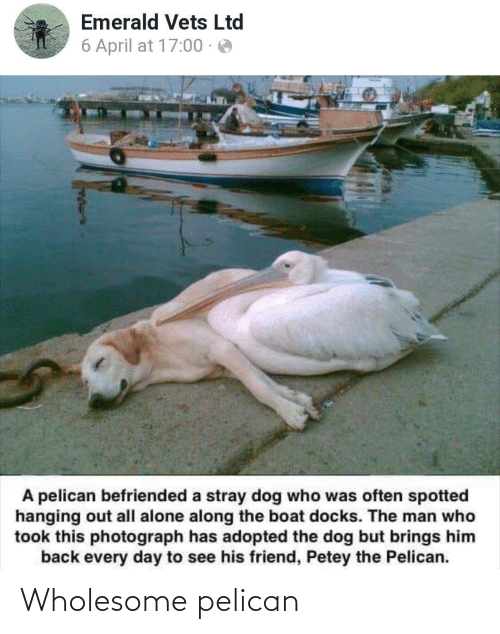 Being Alone, Wholesome, and April: Emerald Vets Ltd  6 April at 17:00 · e  A pelican befriended a stray dog who was often spotted  hanging out all alone along the boat docks. The man who  took this photograph has adopted the dog but brings him  back every day to see his friend, Petey the Pelican. Wholesome pelican