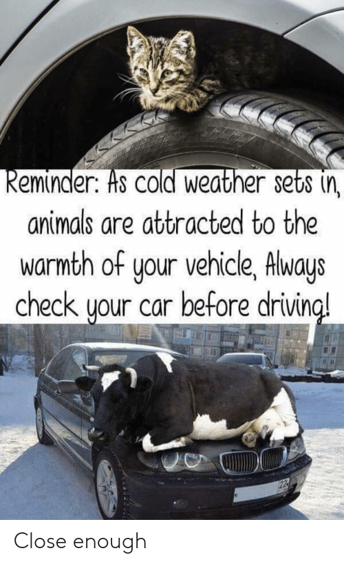Cold Weather: eminder. Hs COld Weather sets (n  animals are attracted to the  warmth of your vehicle, Always  check uour car before drivin  a! Close enough