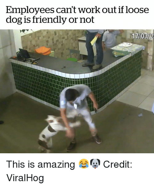 Work, Amazing, and Dog: Employees can't work out if loose  dog is friendly or not This is amazing 😂🐶  Credit: ViralHog