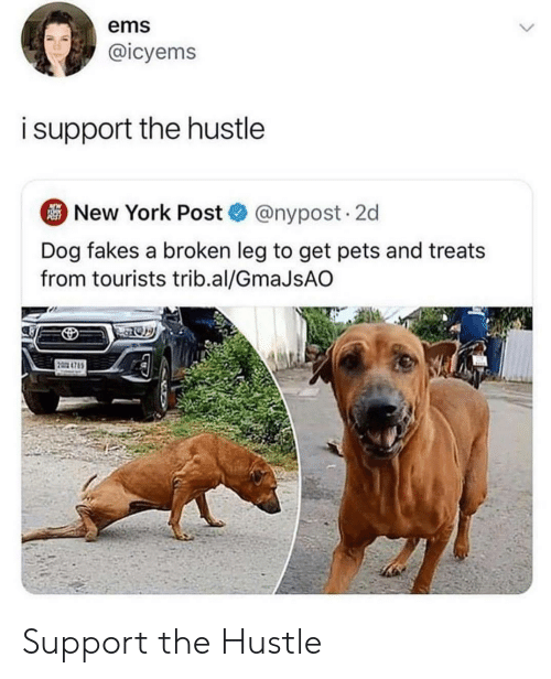 ems: ems  @icyems  isupport the hustle  New York Post@nypost. 2d  Dog fakes a broken leg to get pets and treats  from tourists trib.al/GmaJsAO  2 4785 Support the Hustle