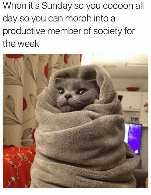 Morphing: en  it's  Sunday  so  you  c  When it's Sunday so you cocoon all  day so you can morph into a  productive member of society for  the week